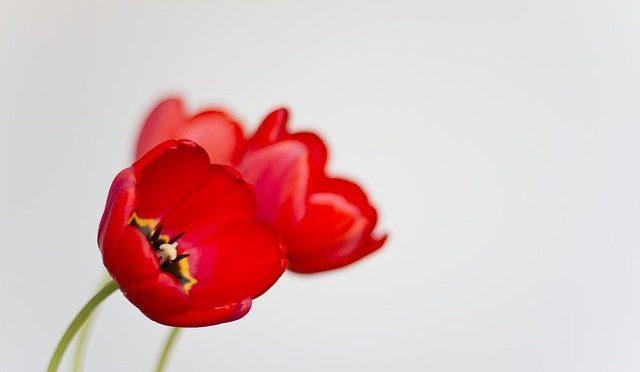 Kwiaty, kwiaty